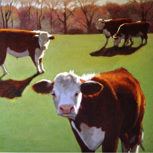 "BROWN'S HEREFORDS, oil, 30""x 36"", 1979, SOLD"